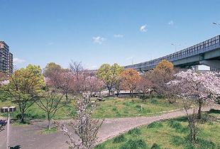 毛馬桜ノ宮公園 1400m