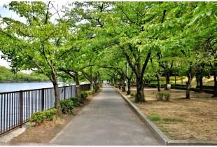 大川岸の遊歩道