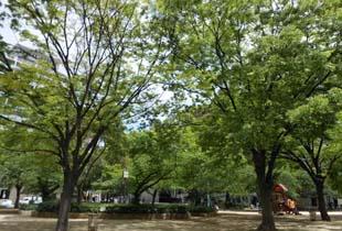 南堀江公園 350m